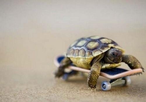 Schildkröte | substanzlos